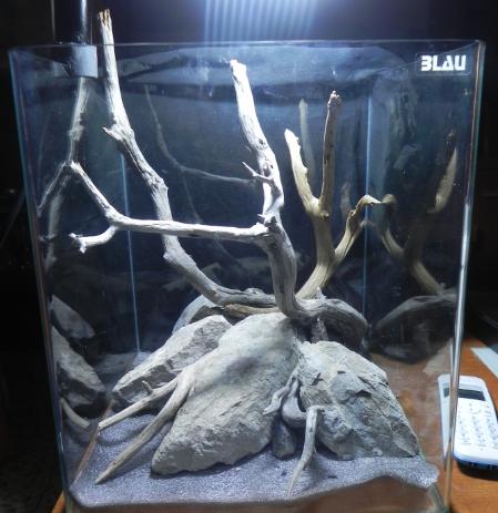 acuario sin agua, con troncos y rocas naturales