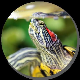 Alimento para: Tortugas e Invertebrados