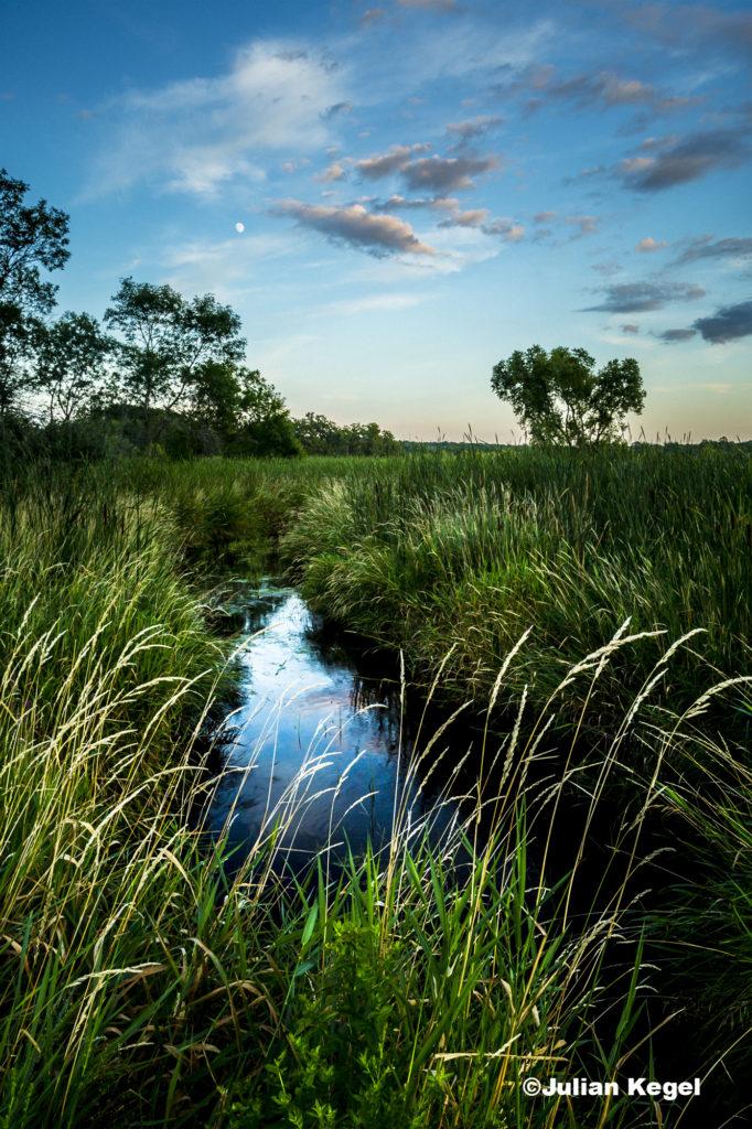 A landscape of a little creek running through a field of tall grasses during golden hour
