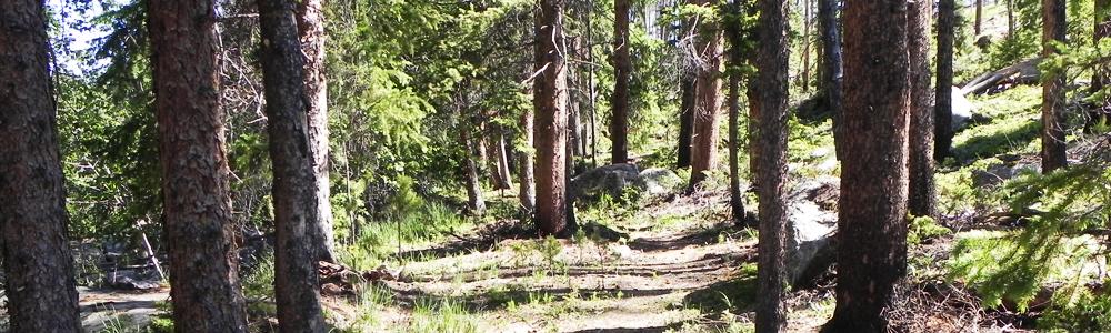 Trails at GLMRD