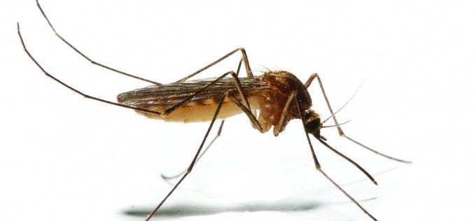Medical Advice: Avoiding mosquitoes and chikungunya virus