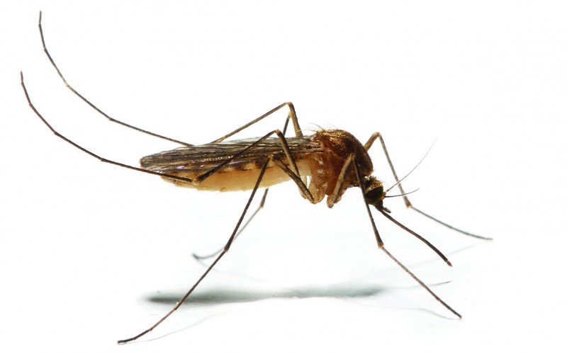 Medical Advice: Avoiding mosquitoes and chikungunya virus