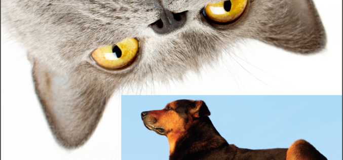Medical Advice: It IS worse than a dog's bark — Preventing animal bite wounds
