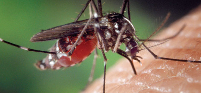 Medical Advice: Drain and cover reminders to prevent mosquito bites