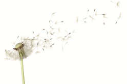 PCMA LETTER: How to manage allergies