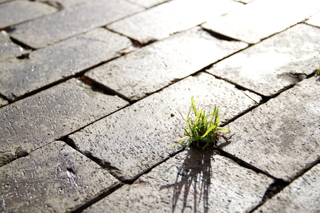 A tuft of grass growing in a crack between paving stones. This shows how resilient we can be and how strong we should be.