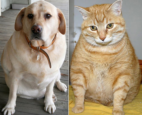 Pet tips: Your pet's healthy weight resolution