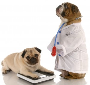 Pet obesity tied to major health issues