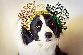 Pet tips for New Years