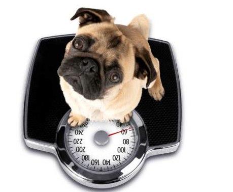 A BIG pet health issue