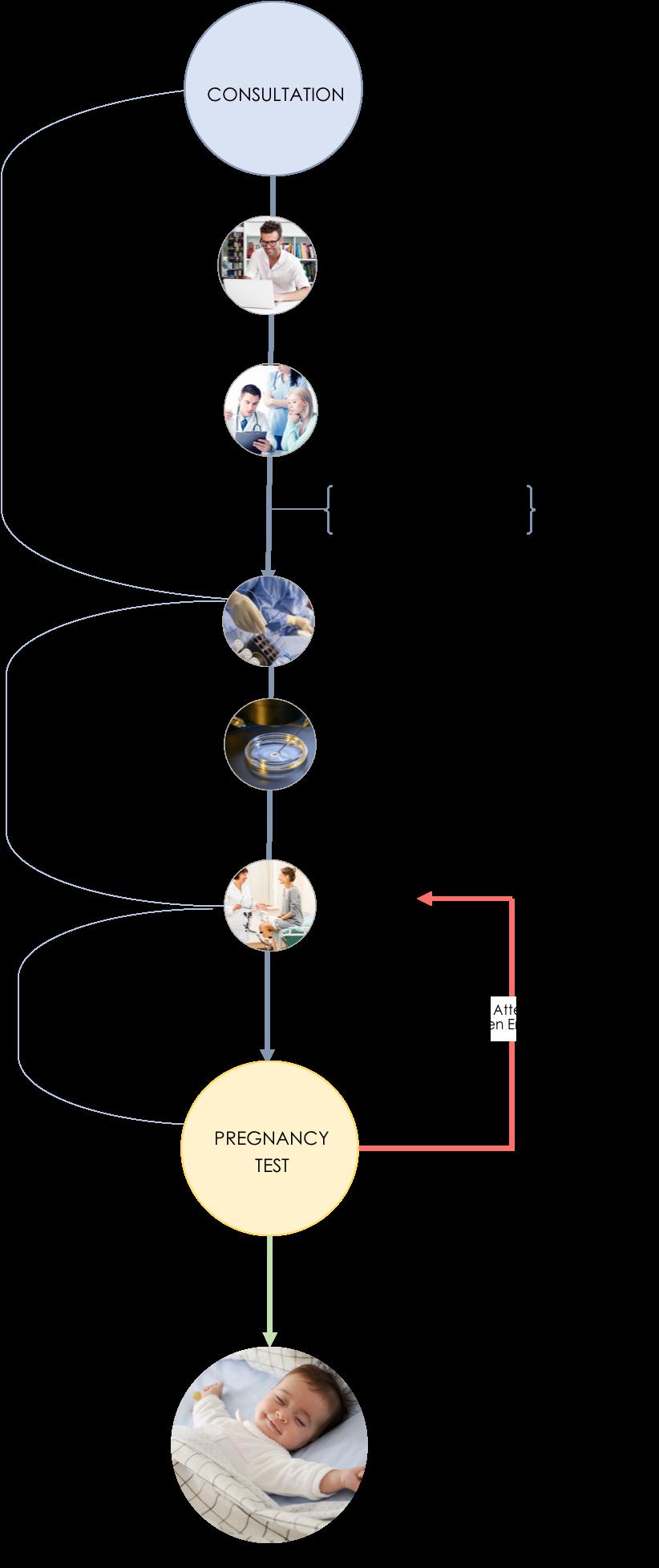 Egg Donation Process NYC