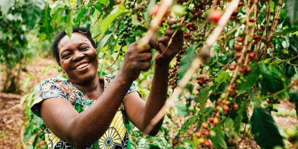 How Rwanda Trading Company helped farmers revitalise the coffee sector