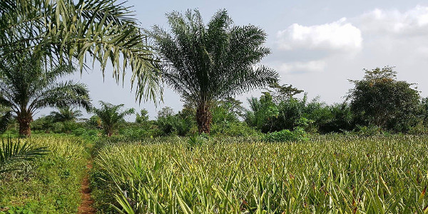 From pineapple juice to agtech: Investors hungry for a piece of Africa's food industry