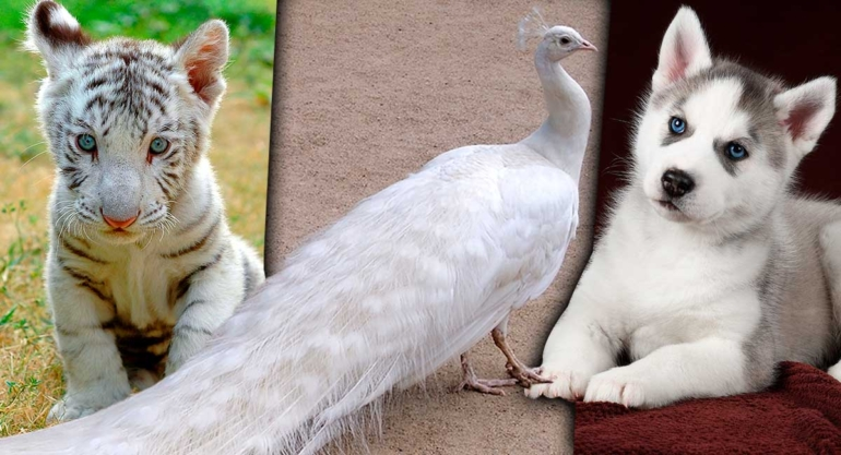 Los-10-animales-más-bonitos-del-mundo1