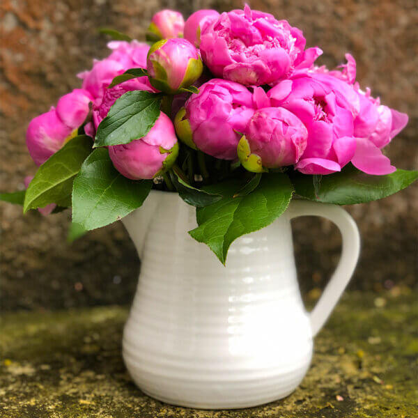 Pink Flowers in a Flower Pot