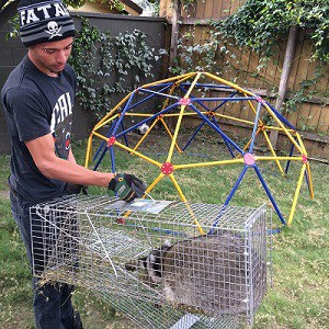 Los Angeles Animal Removal & Trapping Services