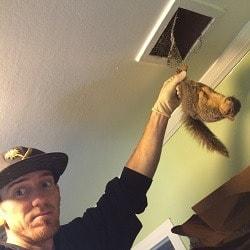 Squirrel in the attic