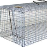 Pigeon Trapping and Removal