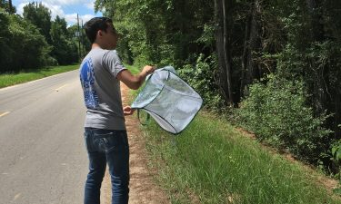 Franklin Carballo Intern, releasing mosquito assassins at a PCT4 study site