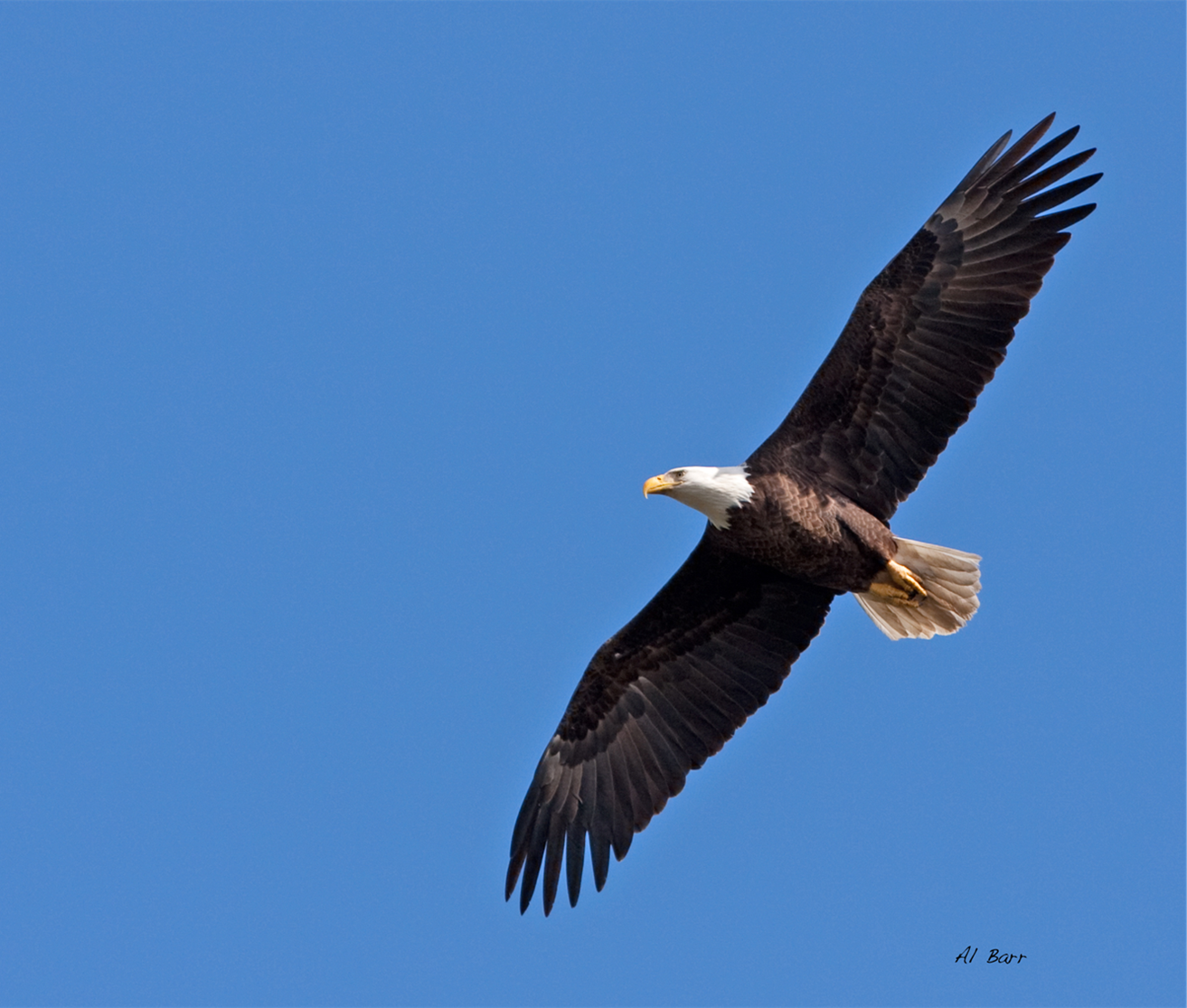 Bald Eagles – Some of Jones Park's Most Iconic Residents