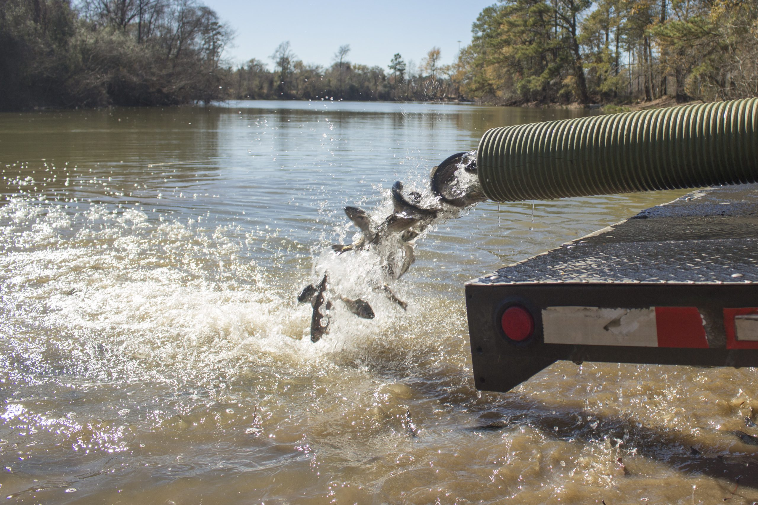 State Parks Department to Deliver Thousands of Trout to Precinct 4 Parks