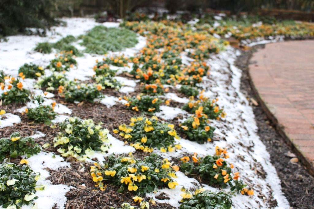 What to do in the Garden After a Frost or Freeze