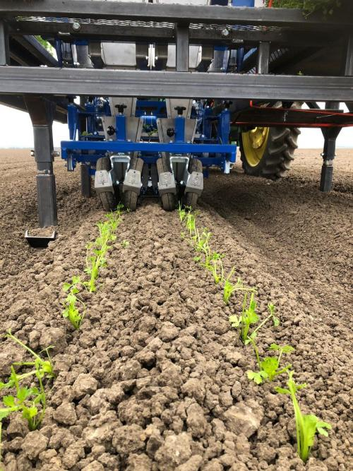 Doublerow-Transplanting-Services