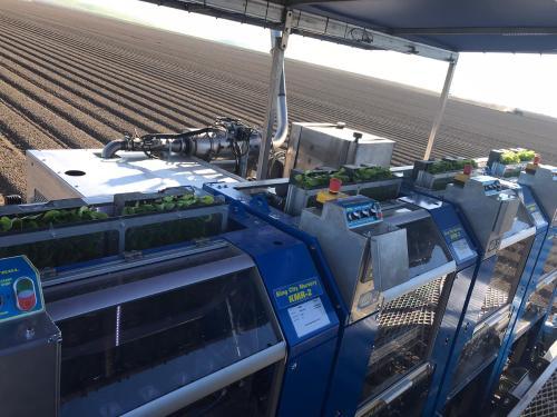vegetable-planting-machine