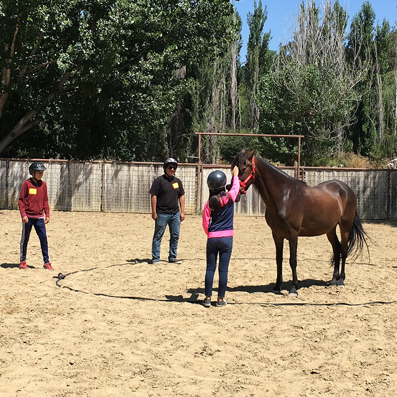 Participants work on herding exercises at Lead-Up California