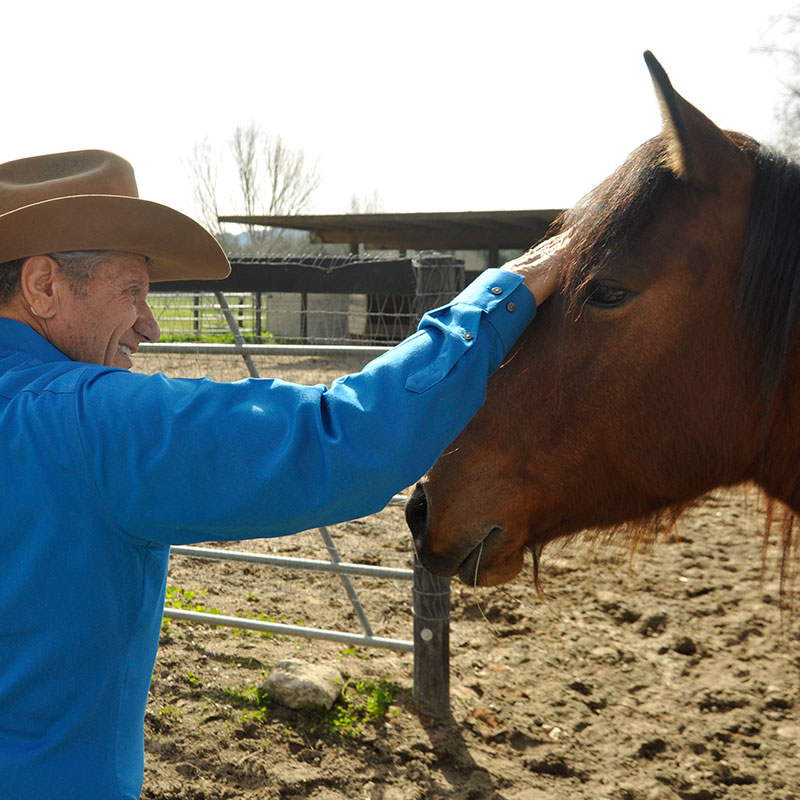 Monty Roberts with Mustangs at Flag Is Up Farms