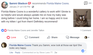 Florida Maine Coon Kittens Testimonial - Florida Maine Coons is a wonderful cattery to work with! Ginnie is so helpful and would always update me on how my baby was doing before I could bring her home. I am so happy and in love with my kitten I got from them! Definitely recommend!