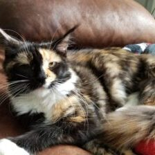 This is our Tortie Female Kiss me