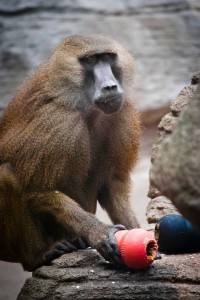 Zoo-amanDSC_0431