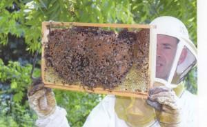 Bee Guy-1