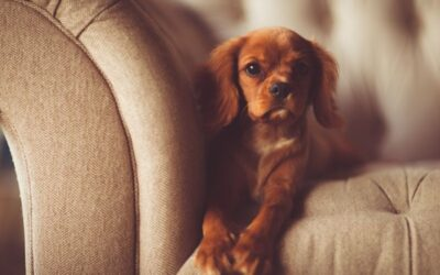 Best Sofa Materials for Dogs