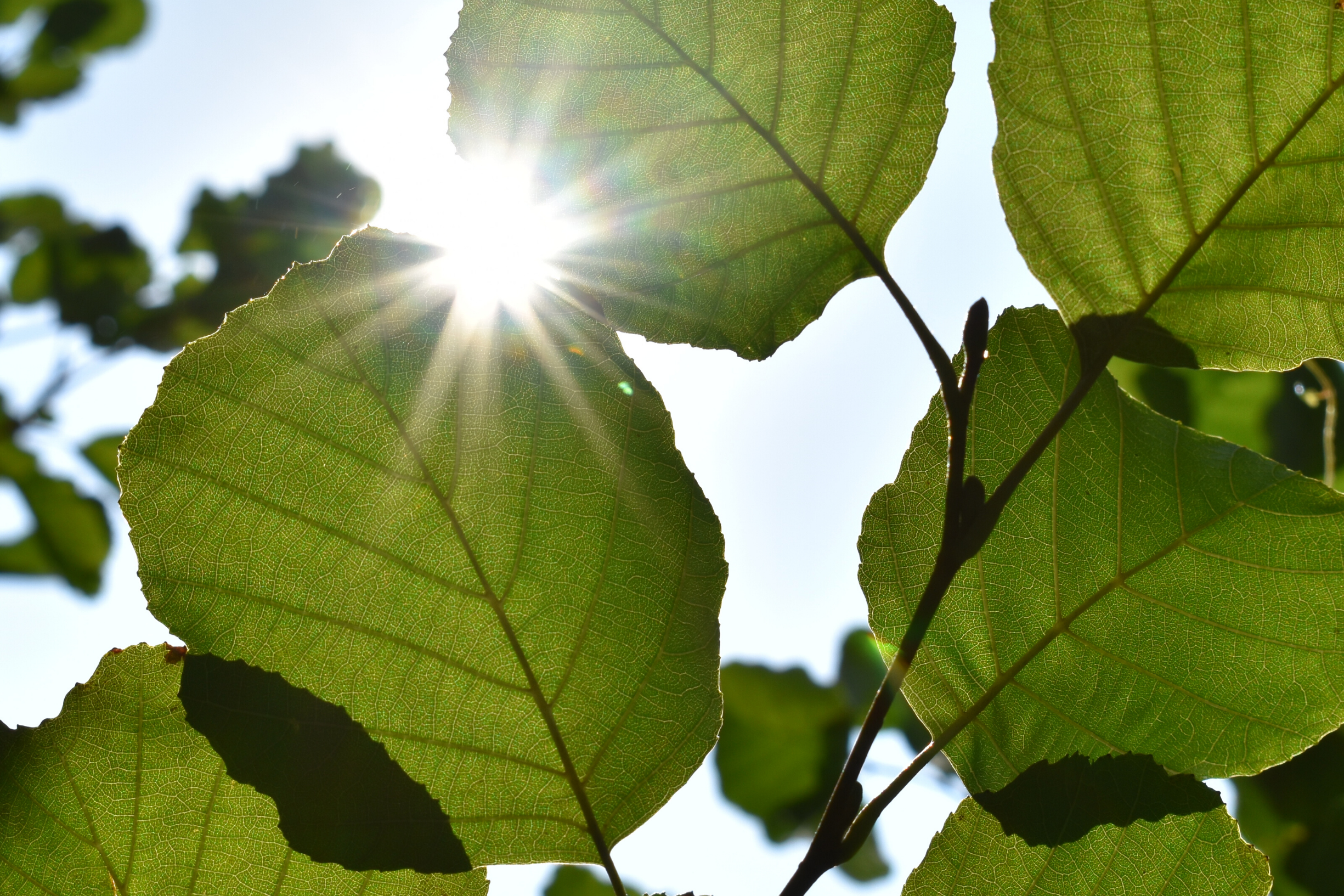 Mental Wellness Picture - Leaves with sunlight shining in background, representative of mental wellness associated with Our Wellness Solution - UWP Six Pillars