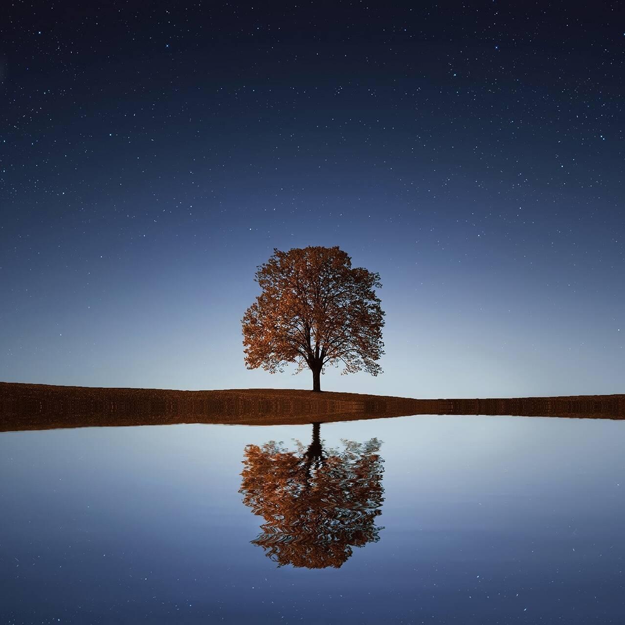 Single Tree, Nigh sky lake image with reflection