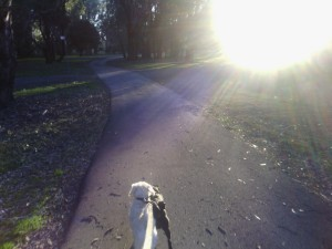 Walk the dogs, Stan Allan Reserve