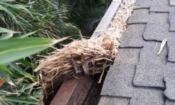 plants in gutter and roof