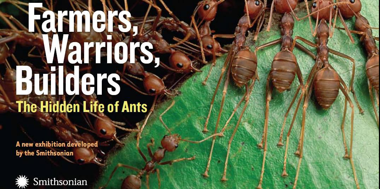 Exhibit ants