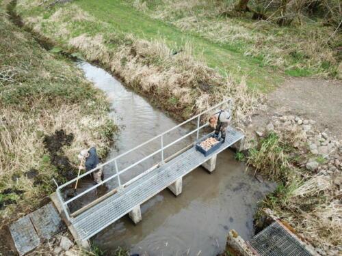 Rhoads Pond Cleaning 2018