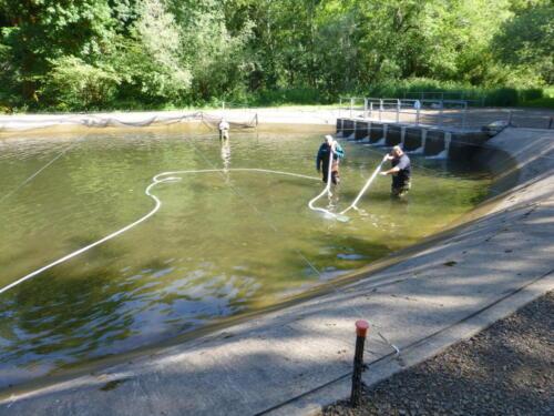 Pond Vacuum 2019