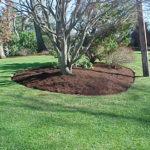 Spruce Mulch