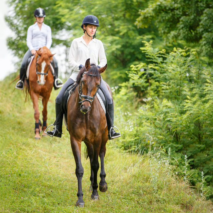 Two rider woman on horses going down from the hill. Equestrian summer activities background