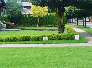Residential sod grass by Western Turf Farms