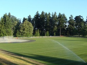 Turf grass for baseball field by Western Turf Farms