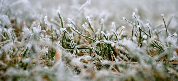 Winter Kill for Homeowners