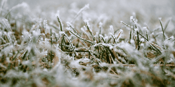 Understanding Winter Kill for Homeowners