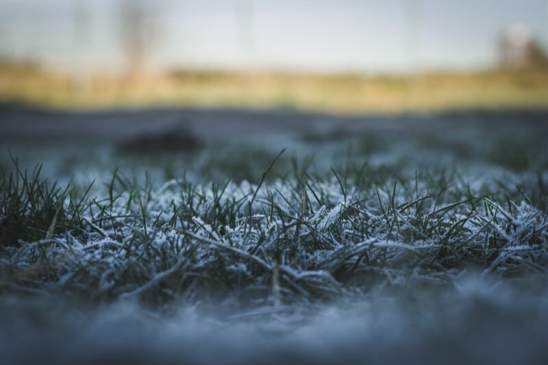 How to Winterize Your Cool Season Turf Grass
