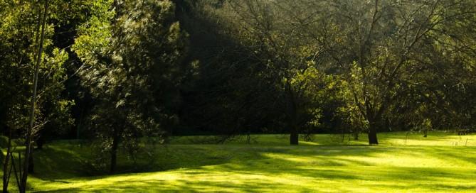 shady lawn